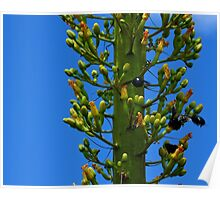 All Abuzz Bumblebees Agave Flowers Poster