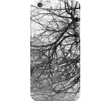 12.3.2016: Leafless Apple Trees iPhone Case/Skin