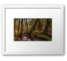 Ancient Forrest Framed Print