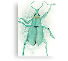 Belle the Bug Canvas Print