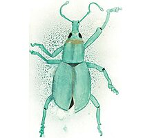 Belle the Bug Photographic Print