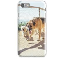 Curious Dogs iPhone Case/Skin