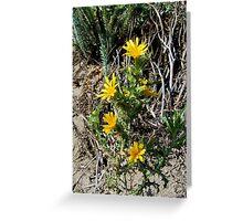 Desert flower Greeting Card