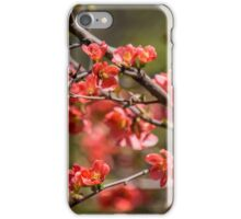 Spring Blossoms 6 iPhone Case/Skin