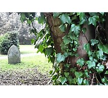Ivy and stone Photographic Print