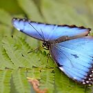 Pretty in Blue by Lin Taylor