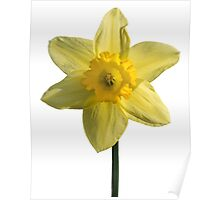 The Daffodil Poster
