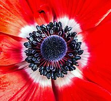 Symmetry on Red by Susan Werby
