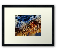 Frosted Sunflower Framed Print