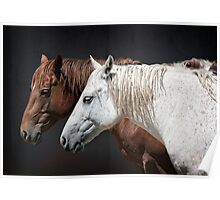 WILDERNESS HORSES Poster