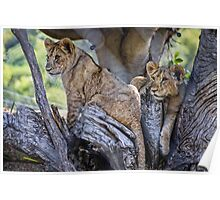 The Baby Cubs Poster