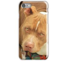 Pitbull on a Blanket iPhone Case/Skin