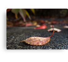 Single autumn Leaf with leaves in background Canvas Print