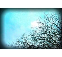 Branches (Lomofied) Photographic Print