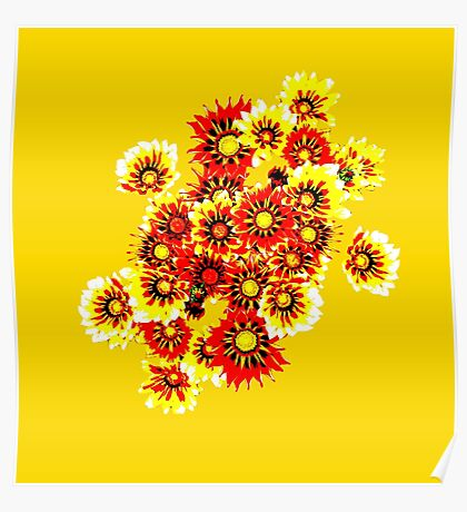 Gazanias in Red and Yellow Transparent Background Poster