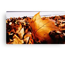 Leaves - what remains of autumn (2016) Canvas Print