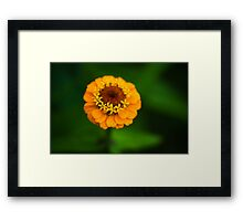 Orange and Green - Beautiful Together Framed Print