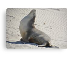 Yoga seal Metal Print