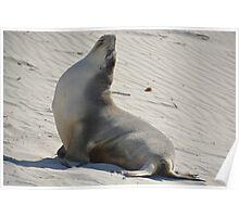 Yoga seal Poster