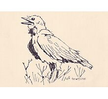 The Crow's song - Coco Photographic Print