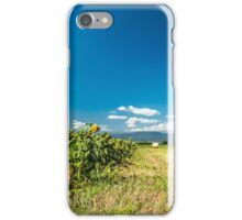 sunflowers field in the italian countryside iPhone Case/Skin