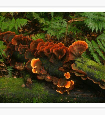 Ginger fungi Sticker