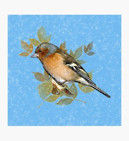 Vintage Chaffinch on blue leaf background Photographic Print