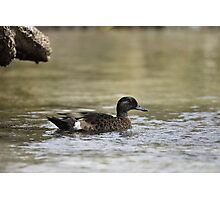 Duck @ Lake Conjola NSW Australia. Photographic Print