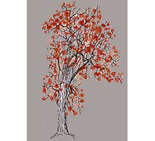 Tree in autumn Photographic Print