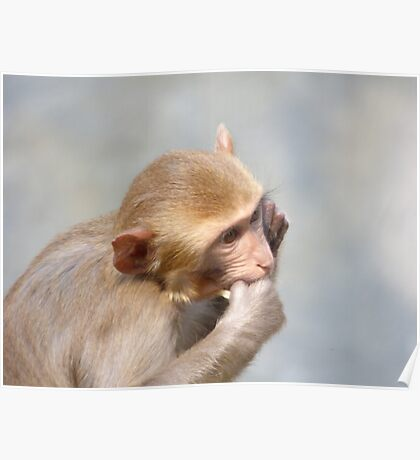 Chiang Mai Zoo Poster