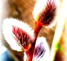 Willows for Palm Sunday by ©The Creative  Minds