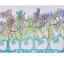 Endless Trees Photographic Print