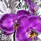 Three Orchids with Lace by Katagram