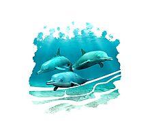 3 Dolphins Photographic Print