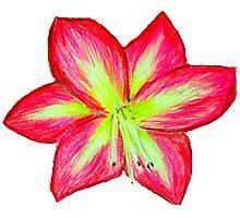 Pink Amaryllis Flower Photographic Print