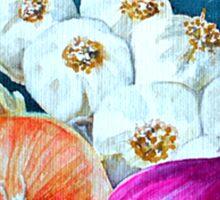 Alliums Sticker