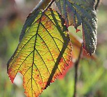 Light behind the Leaf by Vicki Spindler (VHS Photography)