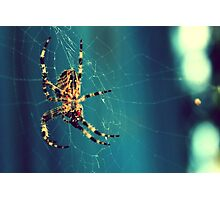 Spider Making Web Photographic Print