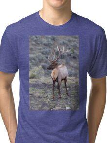 Bull Elk Tri-blend T-Shirt