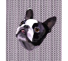 Boston Terrier - GOOOOO BOSTON Photographic Print
