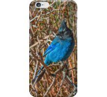 Mountain Blue Jay iPhone Case/Skin