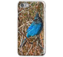 Mountain Blue Jay iPhone Case/Skin