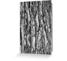 BW Tree Bark Greeting Card
