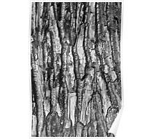 BW Tree Bark Poster