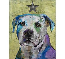 Pit Bull Terrier Photographic Print
