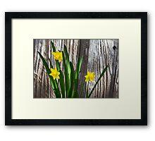 Tiny Daffodils Framed Print