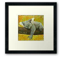 Koala's Day  Framed Print