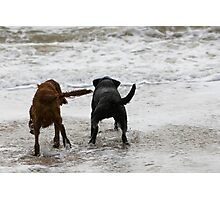 Two dogs paddling  Photographic Print