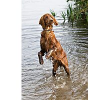 Young irish setter playing in water Photographic Print
