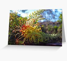 golden grevilleas Greeting Card